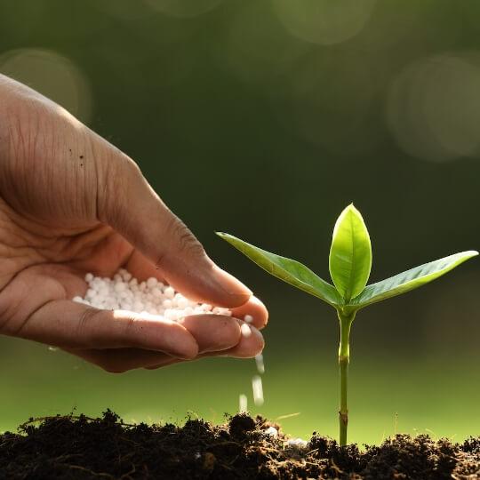 Tuticorin Alkali Chemicals and Fertilizers Ltd